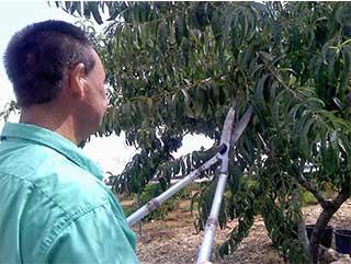 Taller de Horticultura y Jardinería