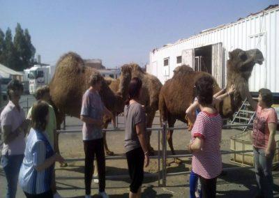 Visita a los camellos en el circo de Gibraleón